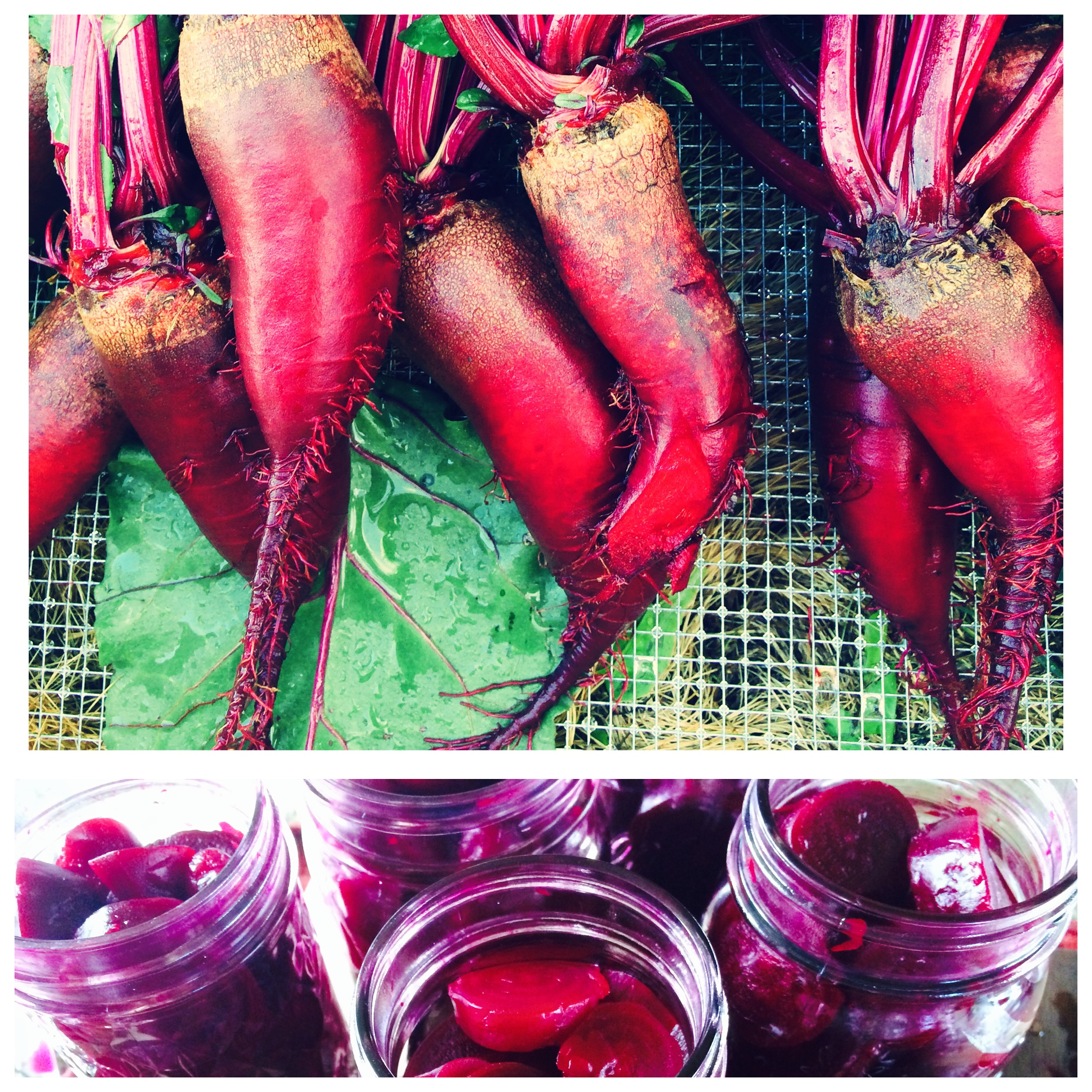 Sweet Apple Cider Pickled Beets