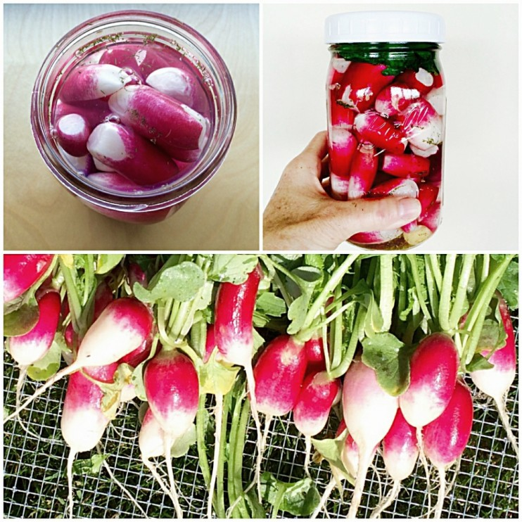 Dill Pickled Radishes